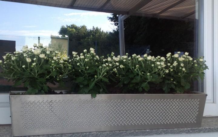 Blumenkasten-am-Fenster